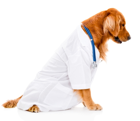 dog-dressed-as-vet